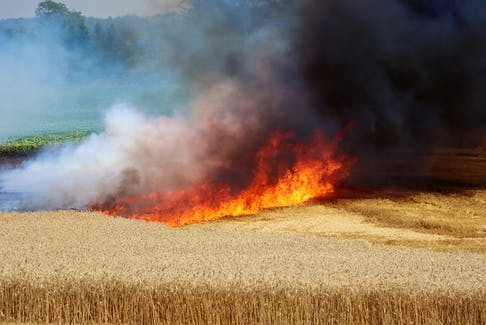 Kentville firefighters arrived on scene to find a working wheat field fire in Centreville on July 29.