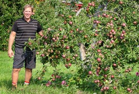 David Lambe is surrounded by branches heavy with ripe Macintosh apples.