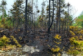 FOR NEWS STORY: A small section of woods was burned, during one of four fires in the woods on Thomas Raddall Drive in Halifax Friday July 30, 2021. Police have charged a person with arson.  TIM  KROCHAK PHOTO