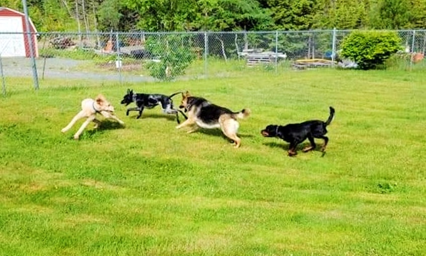 """At K9 Dog Daycare, owner Jonathan Noseworthy asks potential clients to bring their dogs on-site to ensure they feel comfortable leaving them there. """"They don't want to leave their dogs with anyone they don't trust. They're like their child,"""" says Noseworthy. - Contributed"""