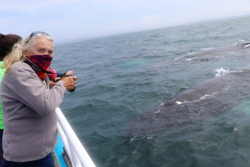 Captain Penny Graham, with Mariner Cruises, takes a photo of some of the whales. - Amy Tudor photo - Saltwire network