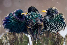 A trio of starlings. — Photo by Joshua J. Cotten on Unsplash