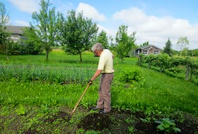 Many gardeners have learned to enjoy the quiet contemplation that is part of the weeding experience which is why early in the morning or late in the evening when the birds are singing is the best time to weed with a hoe – and appreciate your garden, imperfections in all.