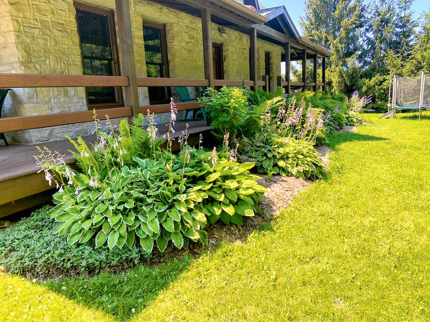 Nutrient delivery, moisture conservation and weed suppression are the three main benefits of wood-chip mulching. Luxurious growth and freedom from weeds are the pay off. - Steve Maxwell