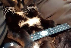 """Lorraine Seward-Smith shares this adorable photo of her cat, Doodie, getting ready to watch a little television after a busy day. He turns 18 this fall in Lower Sackville, N.S. Lorraine said his """"huge"""" personality keeps them entertained.  Thank you for sharing, Lorraine."""