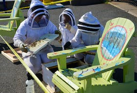 Madison Grace, left, Theodora Iannetti-Hogan and Samantha Iannetti captured the remains Monday of a swarm of honey bees that made a chair on the Sydney wharf their new home. Iannetti, along with her husband Lloyd Hogan, operate Tuckamore Homestead, a commercial bee operation located on Lingan Road, called to the scene to retrieve the wayward bees who will now find a new home on Lingan Road. CAPE BRETON POST PHOTO