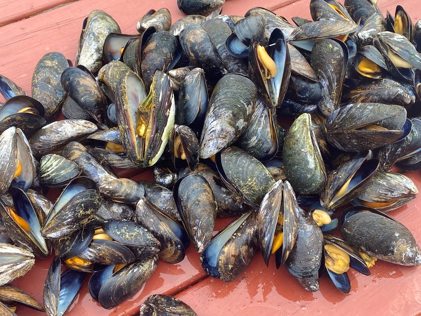There's nothing like a fresh feed of Newfoundland mussels. - Erin Sulley