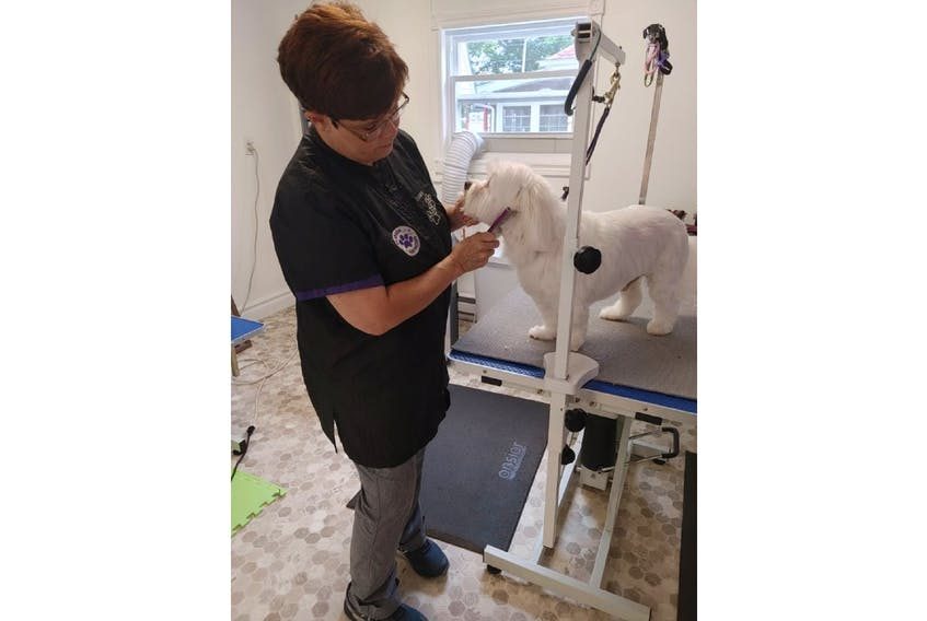 Dawn Noakes gives Koda a trim during a recent grooming appointment. Noakes says the best way to deal with excess pet hair in your home is regular grooming, but there are ways to clean up pet hair, she says.