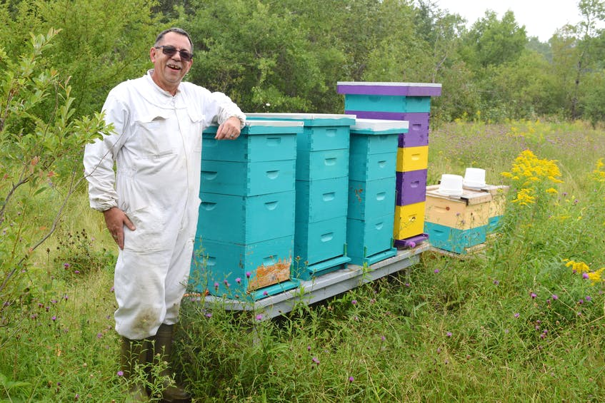 Dave MacPherson, of Dominion, a commercial diver who also owns The Queens Gold, Beekeeping and Honey, stands by some of his 22 langxtroth style beehives in Port Edward. MacPherson recently removed a beehive with an estimated 60,000-70,000 honey bees from the inside of a Glace Bay woman's living room wall and says that's not an unusual discovery. Sharon Montgomery-Dupe/Cape Breton Post - Sharon Montgomery