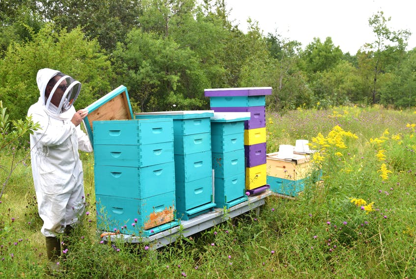Dave MacPherson, of Dominion, a commercial diver who also owns The Queens Gold, Beekeeping and Honey, checking on some of his 22 beehives he keeps in Point Edward. MacPherson recently removed a beehive with an estimated 60,000-70,000 honey bees from the inside of a Glace Bay woman's living room wall. Sharon Montgomery-Dupe/Cape Breton Post