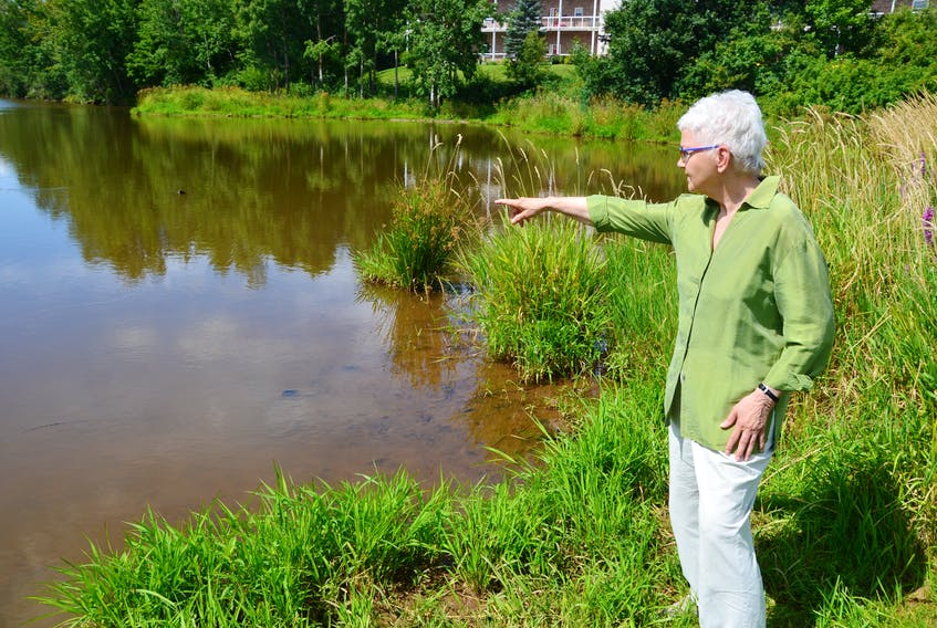 Concerned resident Erma Stultz points to the area of the pond at Pond View Park in Wolfville where she often sees a great blue heron. KIRK STARRATT