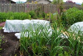 Floating row covers act as barriers between vulnerable crops and their insect pests.