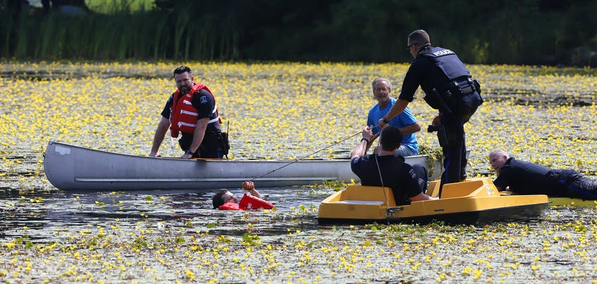 Halifax Regional Police officers and a civilian assist a robbery suspect from a weed-filled Little Albro Lake in Dartmouth, Friday, Aug. 27, 2021. - Tim Krochak