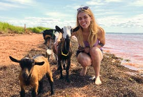 Prince Edward Island's Activator says unique Island experiences, like hanging out with beach goats, make it the best place to be, regardless of the season. - Photo Contributed.