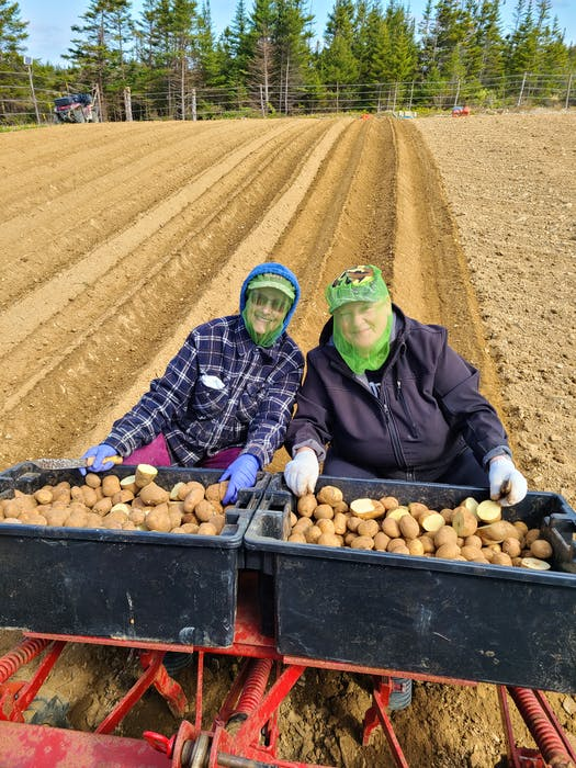 Karen Durfey's sister, Nina, and cousim, Diane, work on a field of potatoes. Since taking over the farm, Durfey says she's been most successful finding women who want to work there.