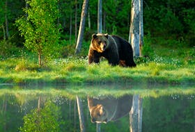 Do you know what to do if you encounter a bear or other wildlife while out on a hike or camping? Sarah Poko asked an animal safety expert for advice.