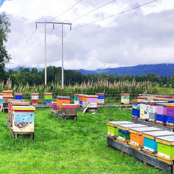 Decorated bee boxes at Wood'n'Hive Honey.  - Contributed