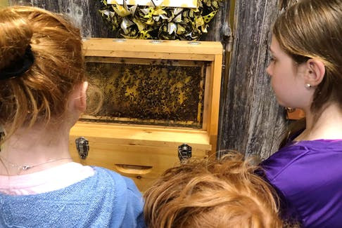 Visitors to Wood'n'Hive Honey watch bees in an observation hive.