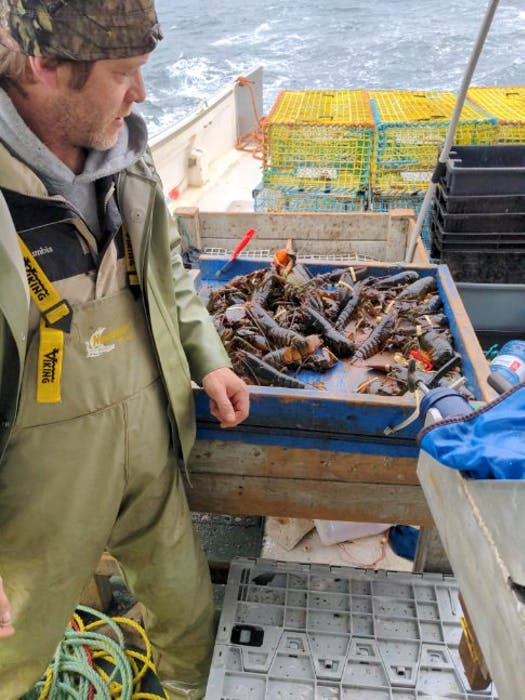 John Bryan, who fishes lobster with Justin Stewart, eyes some of their catch from Halifax's Northwest Arm. - Contributed