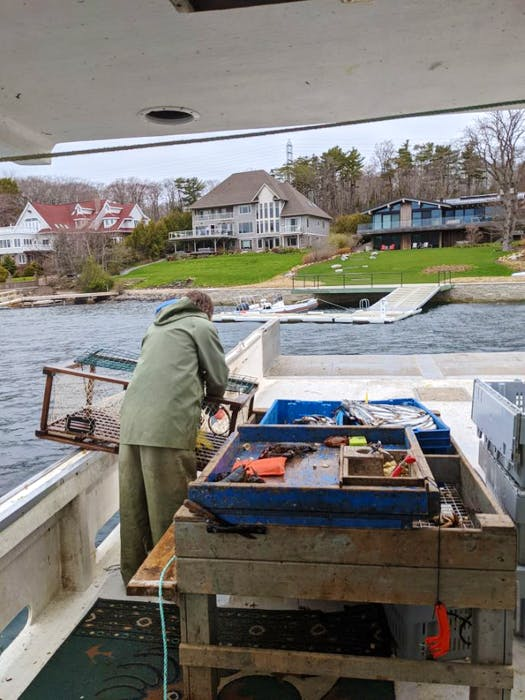 John Bryan, who fishes with Justin Stewart, baiting lobster traps in Halifax's Northwest Arm. - Contributed