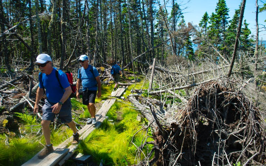 Visitors to Gaff Point navigate their way around the trail on rustic bridges over wet areas. - Ryan Taplin