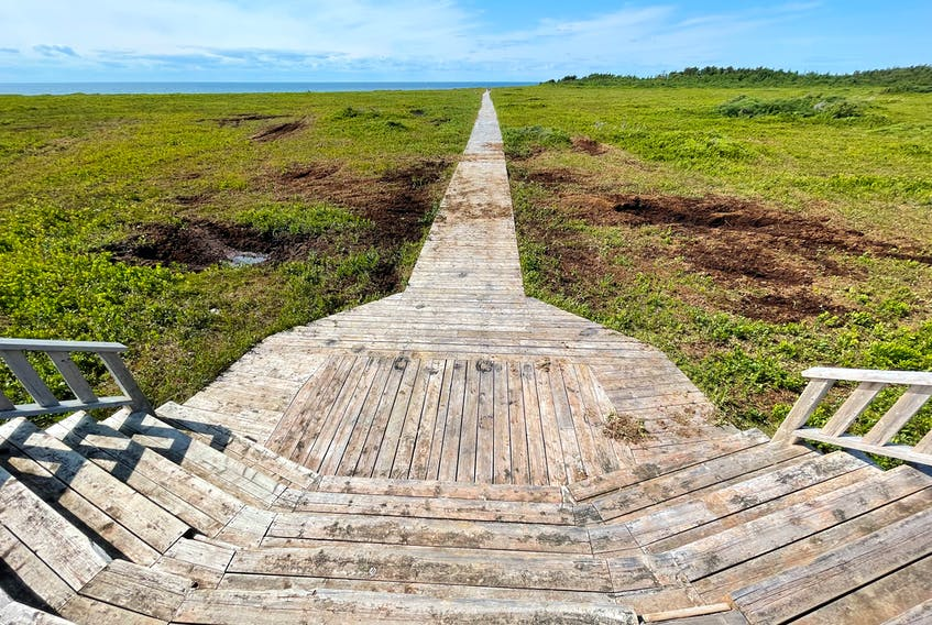Pamela Atkinson was walking along the Black Marsh Trail in Tignish when she saw ruts in the ground where people had driven through on their ATVs last fall.