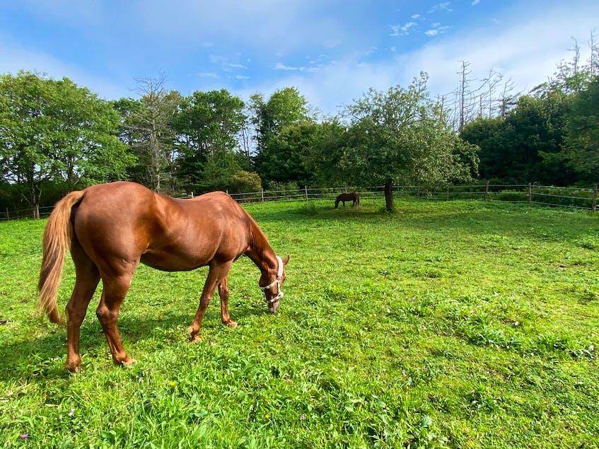 Ally, with miniature horse, Nemo in the background. CARLA ALLEN • TRI-COUNTY VANGUARD