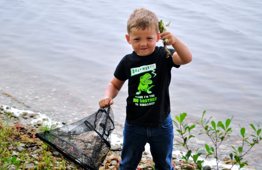 It only took a  matter of minutes for four year old Jace Nickerson to net a frog  while pursuing one of his favorite activities at Beaverdam Lake, Shelburne County. This one was the regular green colour. KATHY JOHNSON - Kathy Johnson