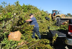 St. John's resident John Morgan unloads branches, knocked down by hurricane Larry at his east-end property, at a drop-off site set up at Quidi Vidi Lake by the City of St. John's, on Saturday morning, Sept. 11. JOE GIBBONS • THE TELEGRAM
