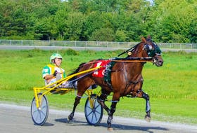 Sunshine Lou and driver Walter Walker are shown winning the feature race in 1:57 at Northside Downs in North Sydney on Saturday afternoon. CONTRIBUTED • TANYA ROMEO