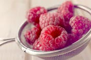 Raspberries, and other berries, played a key role to early settlers from Europe. Often, berries were the only fresh fruit available. - Storyblocks