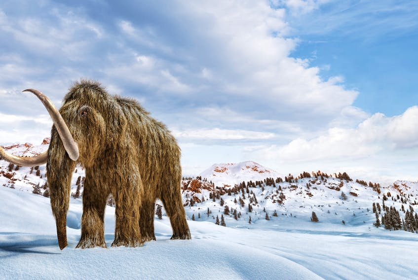 A new startup says it's ready and willing to spend $15 million US on the Jurassic Park-style endeavor of reviving a long-dead woolly mammoth in the hopes of one day restoring it to the tundra regions where it once freely roamed.
