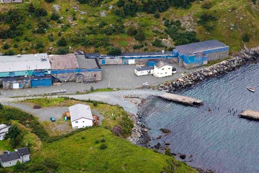 A company from St. John's hopes to use the former groundfish plant in Tors Cove to process seal oil and meat into omega-3 oils and nutraceuticals.