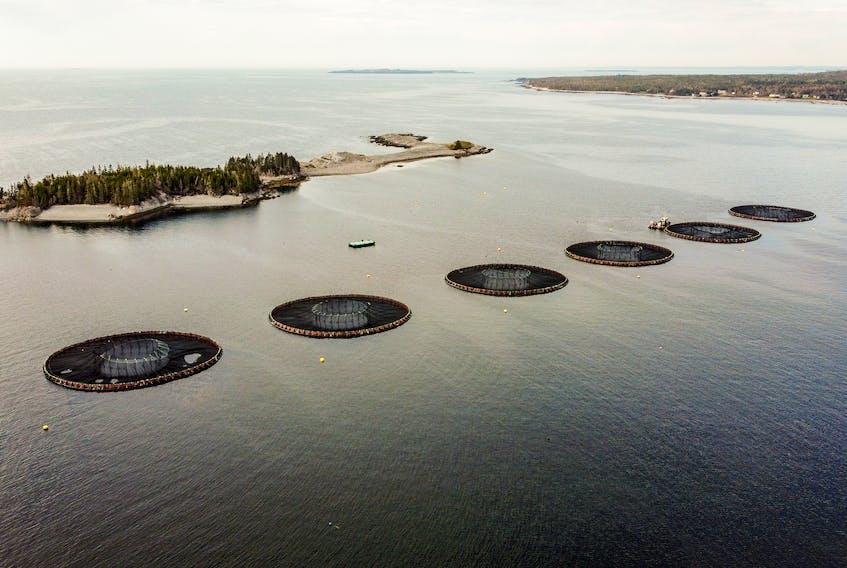 The federal government is moving salmon farming out of the ocean in B.C. It's time for the next government to do same on the East Coast. - Simon Ryder-Burbidge