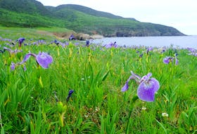 Lowland Cove, near the northern tip of Cape Breton Island, is on the Nova Scotia Nature Trust's urgent list for protection. -- Rich LaPaix photo