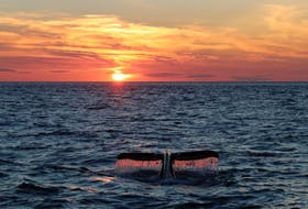 I challenge you to take a quick look at this picture. I bet you can't.  The beauty of this photo is simply mesmerizing.  Shelley Lonergan captured this stunning scene while out whale watching off Brier Island earlier this month.   Thank you so much for sharing your talent and Nature's beauty with us, Shelley.