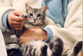 Longer wait times for routine care appointments have become the norm in veterinary clinics during the past several months. Laura Perry, an associate veterinarian in Sydney, explains some of the reasons why and offers suggestions as to how pet owners can help.