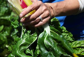 British Columbians (31.4 per cent) and Ontarians (31 per cent) are the nation's biggest produce lovers.