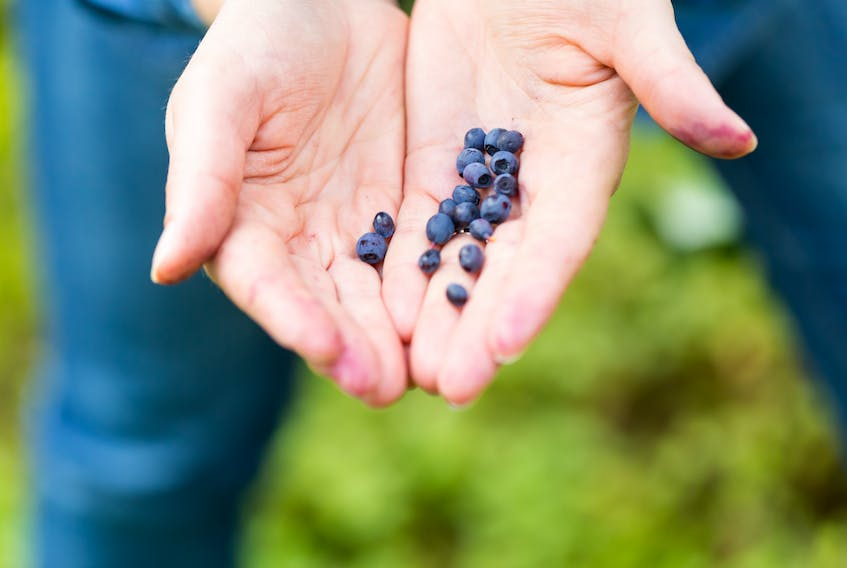 """""""There are so many advantages to foraging and collecting your own food,"""" says Anne Alexandra Fortin. While picking blueberries isn't as easy as picking them up at the grocery store, nothing beats the fresh flavour. - Storyblocks"""