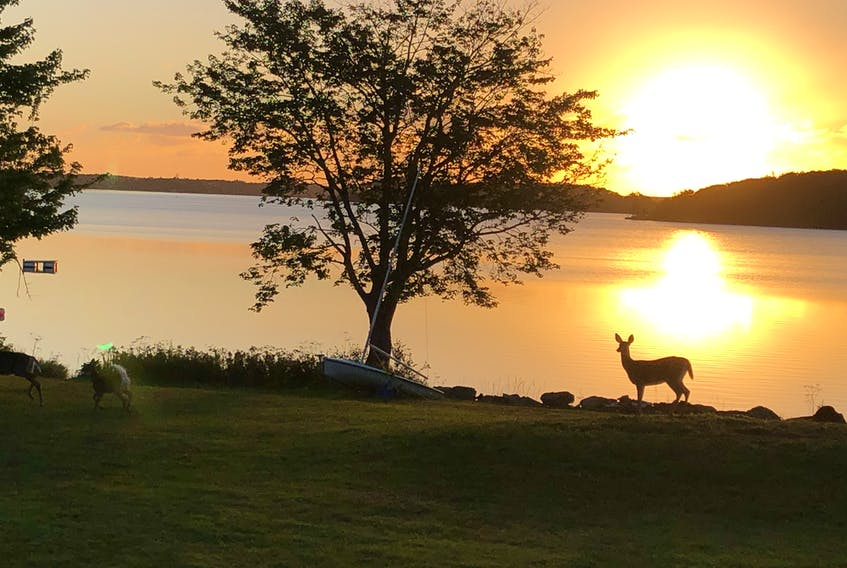 Judy Doyle sent this photo of deer visiting her property on Cape Breton's Mira River on Monday morning. She said deer are frequent visitors to the area and yesterday she counted as many as seven walking along the river near her home. The deer silhouetted against the morning sun are a beautiful sight.