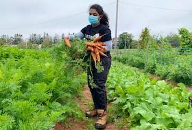 Anagha Pradeep Kumar is doing an apprenticeship in vegetable horticulture this summer. Pradeep Kumar is learning skills in the field through the Cultiv8 Innovation Sandbox program.