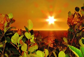 Can you say gorgeous? Ronald O'Toole sent this 'Sunrise at the Castle' photo he took on Sept. 17 at Logy Bay, N.L. The sun's rays look like the petals of a flower as it rises out of the Atlantic Ocean. Logy Bay is located near Torbay and is about 10 minutes from downtown St. John's.