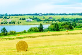 Dry P.E.I. hay has been shipped to Western Canadian farmers who are struggling to feed their animals due to severe drought.