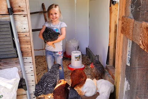 Faith Rouse and her parents, Kari and Matt, are enjoying learning to raise chickens on their homestead in Port Royal.