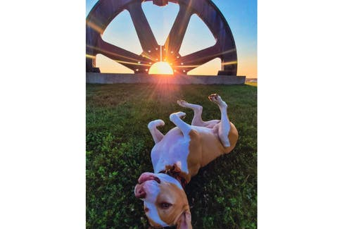 Meet Nellie. She hangs out with Kevin Leblanc. They were at Open Hearth Park in Sydney when Kevin captured a little canine whimsy and this lovely sunset. Nellie is quite a ham; she even has her own Instagram account. You can follow her at whoa_Nellie9.