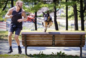What does it take to get more Canadians moving? David Ross has Bear jump over park benches for exercise in Lafontaine Park.