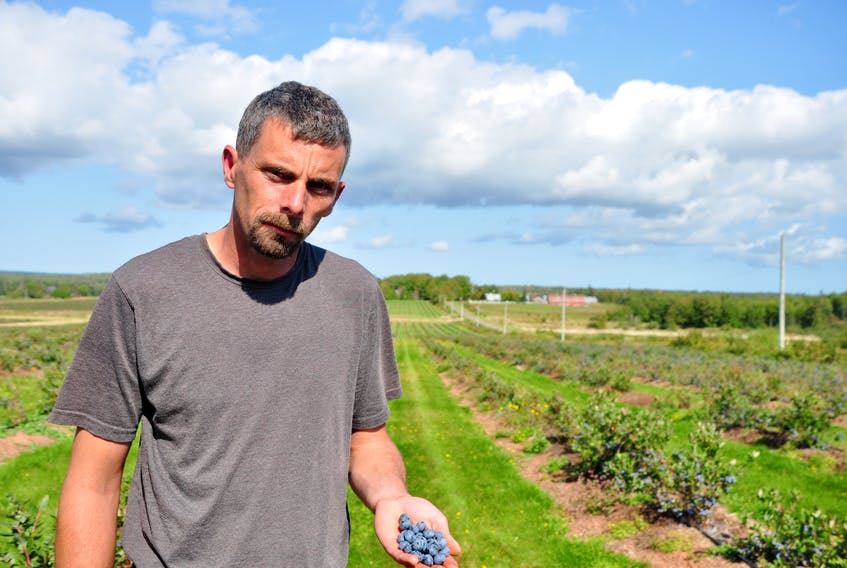 Earl MacCormac, who owns Lorne Valley Ranch, said he normally has around 20 locals helping him harvest his 250 acres of blueberries. This year, he has two.