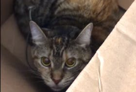 Cat in box left outside the Etobicoke Humane Society in a sealed box with telephone cord around its neck.