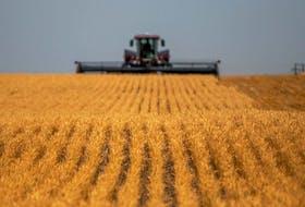 A swather cuts wheat near Saskatoon on Thursday, July 29, 2021.
