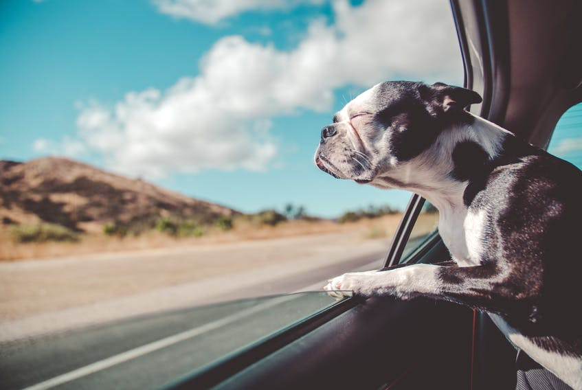 It's not hard science whatsoever, but interesting to note millennial dog ownership and online searches for SUVs have both spiked recently. Avi Richards photo/Unsplash